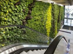 Wereldhave opent verticale tuin